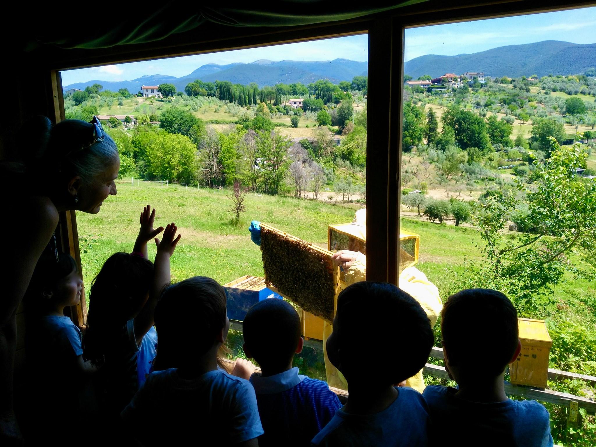 Corso sulle api - eventi in sabina