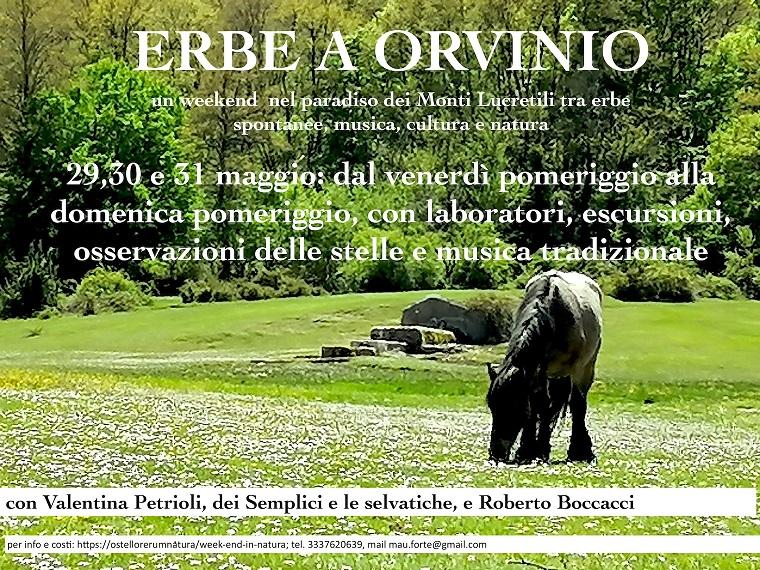 Corso alla conoscenza e uso delle erbe spontanee in Sabina, nel Lazio - eventi in sabina