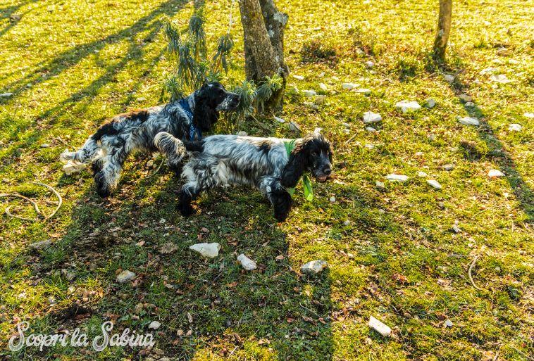 Corso di formazione per cani da tartufo a Rieti e nel Lazio