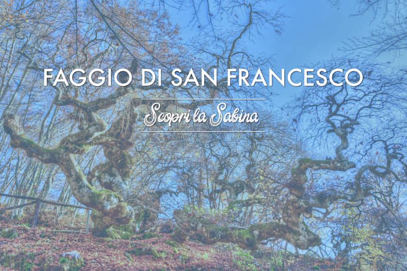 Faggio di San Francesco - cosa vedere in sabina